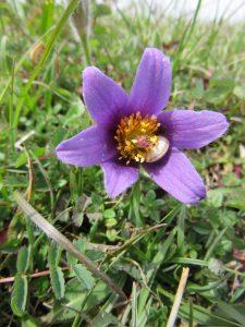 troubled weeds in grasslands